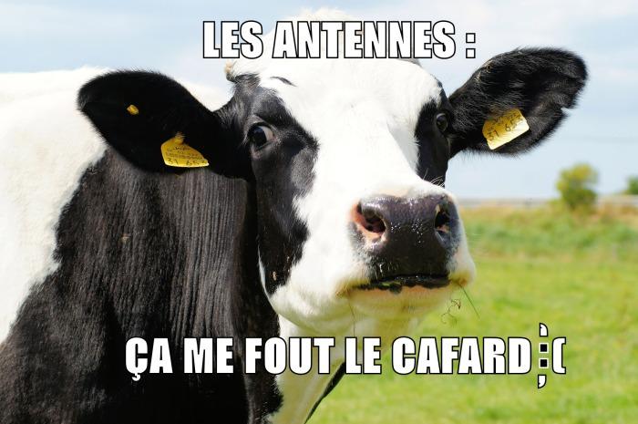 cow-meme v3
